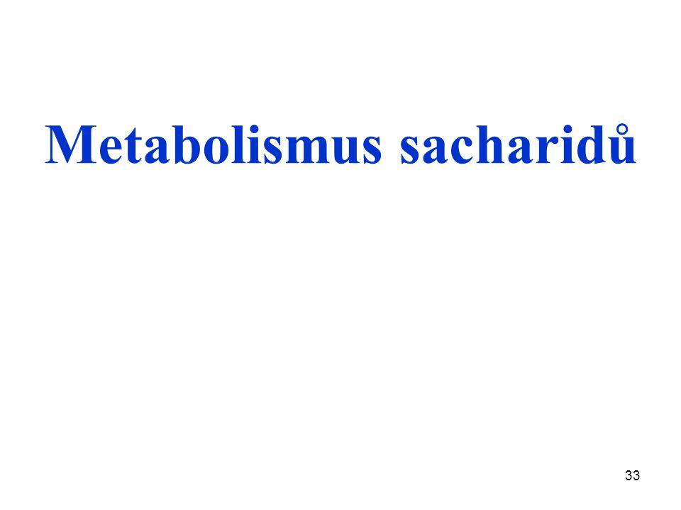 33 Metabolismus sacharidů