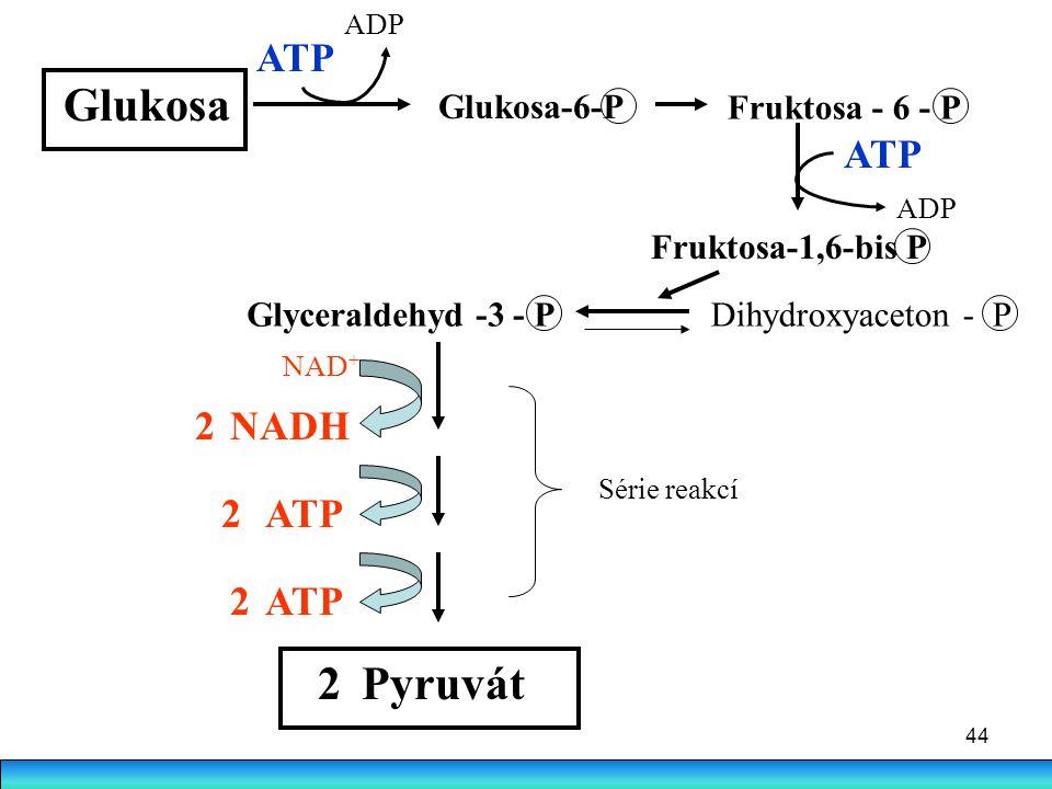 44 Glukosa Glukosa-6-P Fruktosa - 6 - P Fruktosa-1,6-bis P ATP ADP ATP ADP Glyceraldehyd -3 - PDihydroxyaceton - P NADH ATP Série reakcí Pyruvát 2 2 2