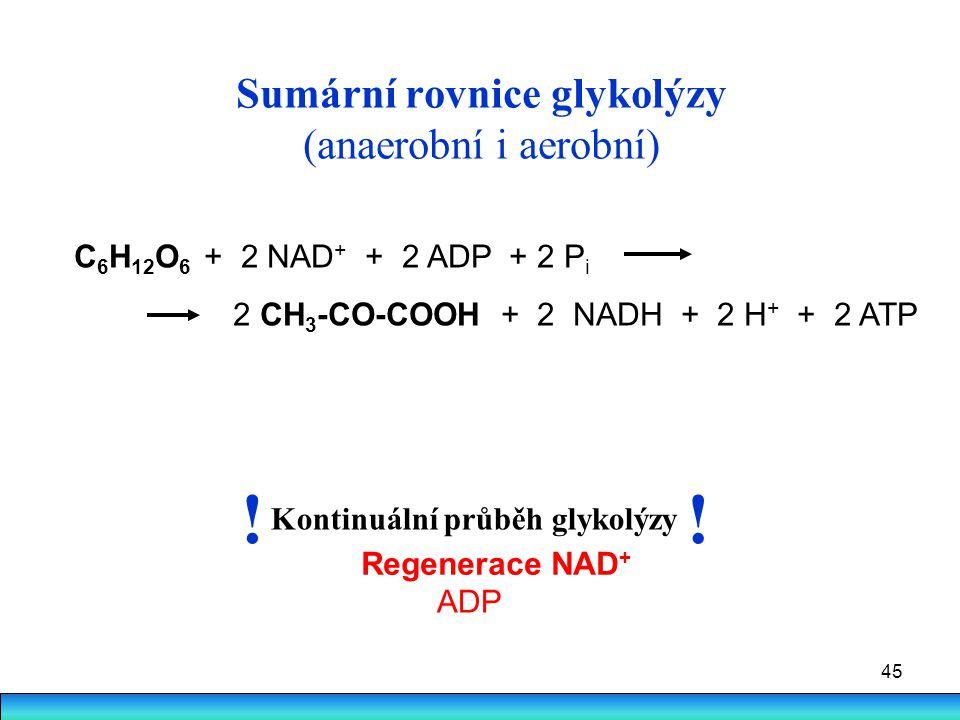45 Sumární rovnice glykolýzy (anaerobní i aerobní) C 6 H 12 O 6 + 2 NAD + + 2 ADP + 2 P i 2 CH 3 -CO-COOH + 2 NADH + 2 H + + 2 ATP Kontinuální průběh