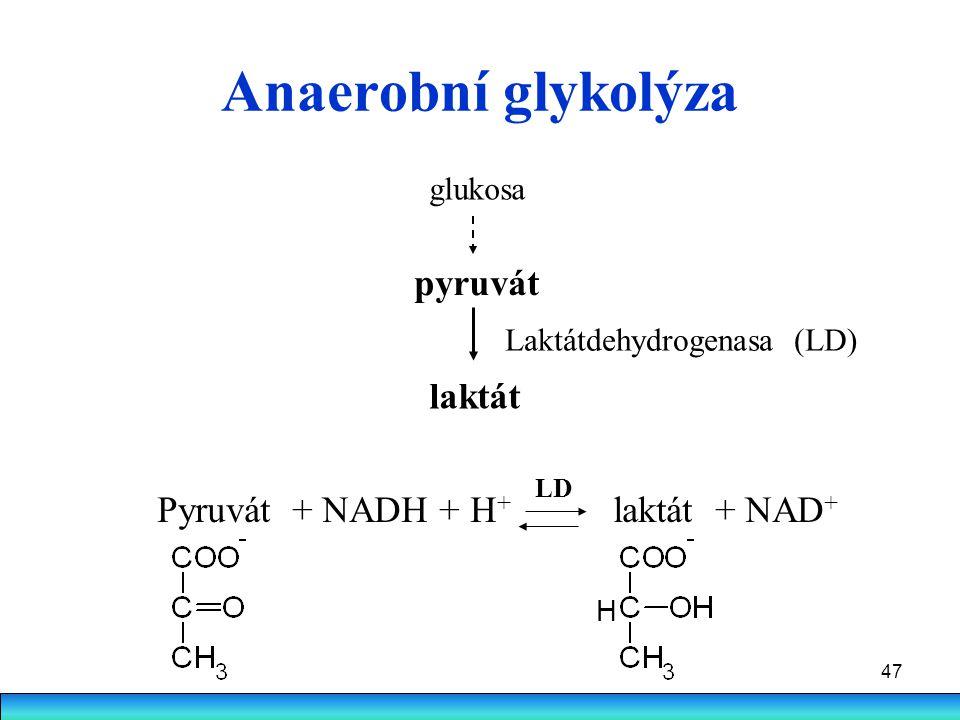 47 Anaerobní glykolýza Pyruvát + NADH + H + laktát + NAD + glukosa pyruvát laktát Laktátdehydrogenasa (LD) LD H
