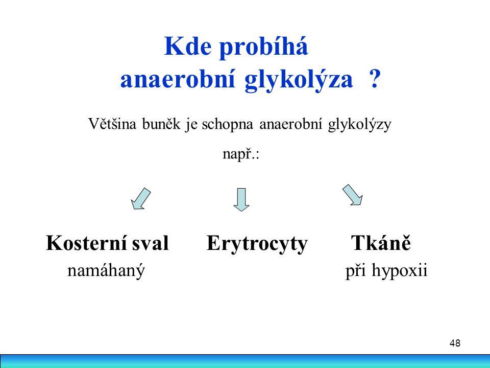 48 Kde probíhá anaerobní glykolýza ? Kosterní sval Erytrocyty Tkáně namáhaný při hypoxii Většina buněk je schopna anaerobní glykolýzy např.: