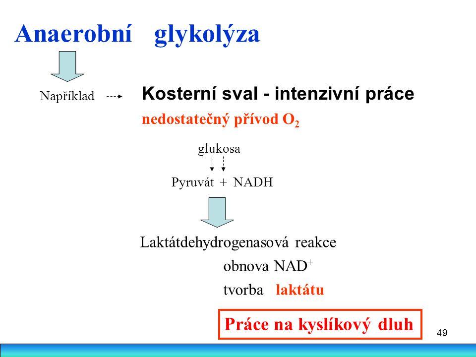 49 Laktátdehydrogenasová reakce obnova NAD + tvorba laktátu Kosterní sval - intenzivní práce nedostatečný přívod O 2 Práce na kyslíkový dluh Anaerobní