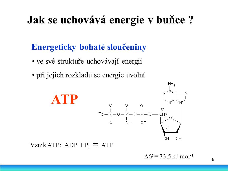 5 Energeticky bohaté sloučeniny ve své struktuře uchovávají energii při jejich rozkladu se energie uvolní ATP Vznik ATP : ADP + P i  ATP ΔG = 33,5 kJ