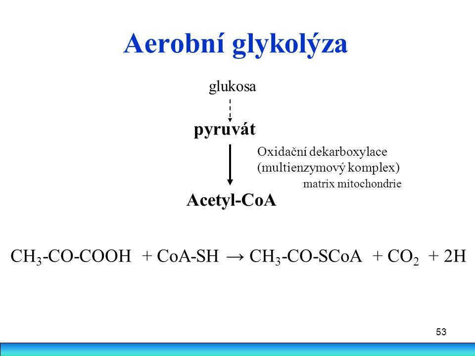 53 Aerobní glykolýza glukosa Acetyl-CoA Oxidační dekarboxylace (multienzymový komplex) matrix mitochondrie pyruvát CH 3 -CO-COOH + CoA-SH → CH 3 -CO-S
