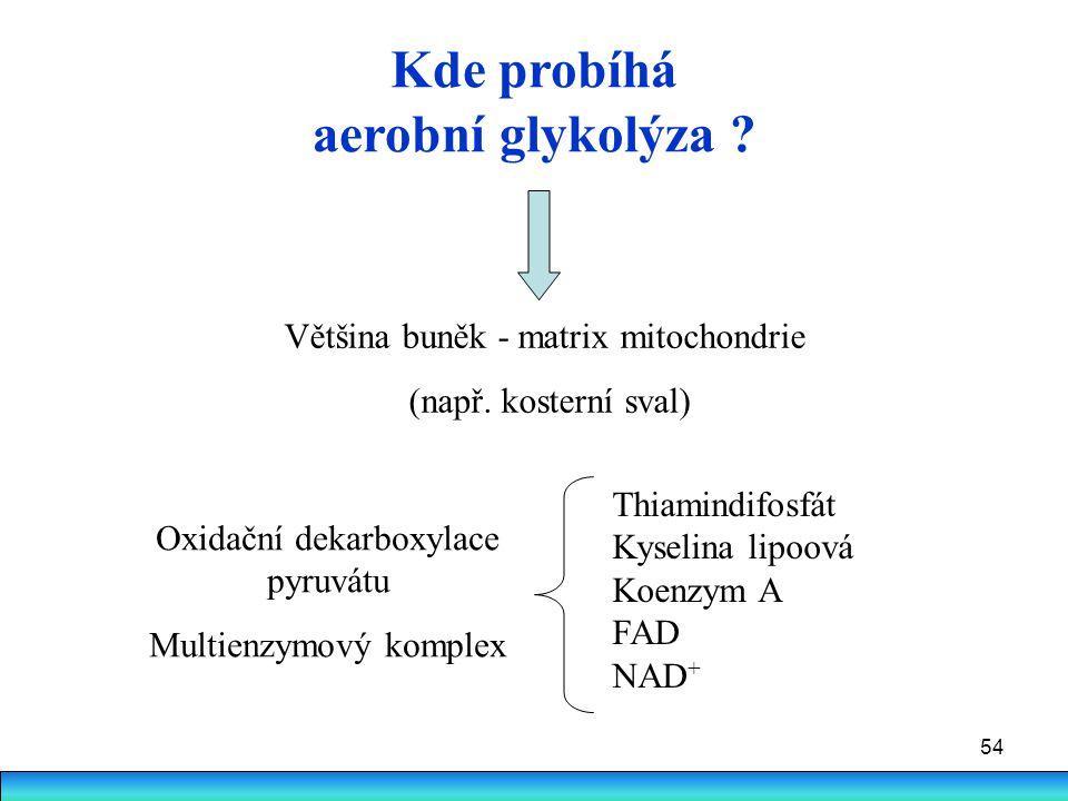 54 Kde probíhá aerobní glykolýza ? Většina buněk - matrix mitochondrie (např. kosterní sval) Oxidační dekarboxylace pyruvátu Multienzymový komplex Thi