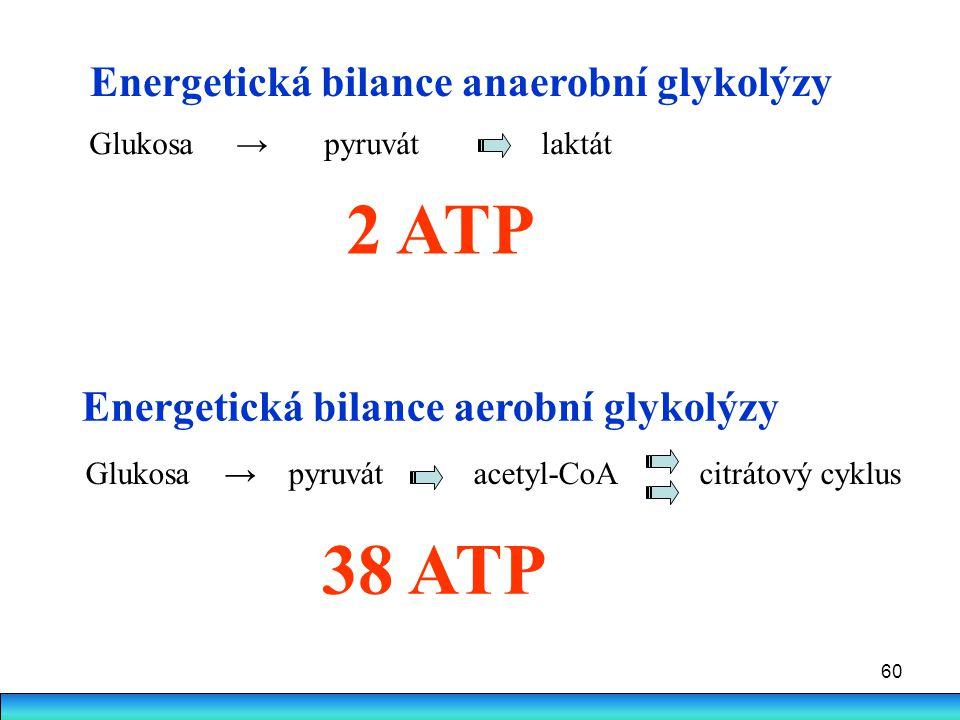 60 Energetická bilance anaerobní glykolýzy Glukosa → pyruvát laktát 2 ATP Energetická bilance aerobní glykolýzy 38 ATP Glukosa → pyruvát acetyl-CoA ci