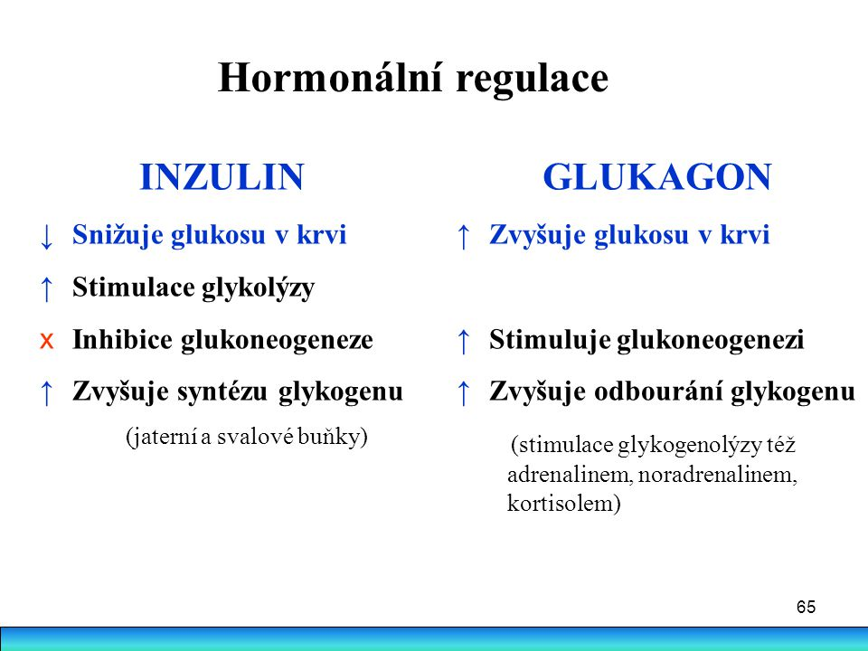 65 Hormonální regulace INZULIN ↓ Snižuje glukosu v krvi ↑ Stimulace glykolýzy x Inhibice glukoneogeneze ↑ Zvyšuje syntézu glykogenu (jaterní a svalové