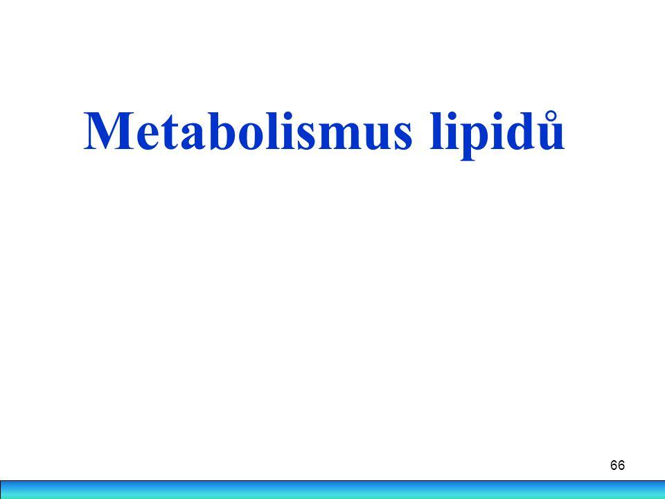 66 Metabolismus lipidů