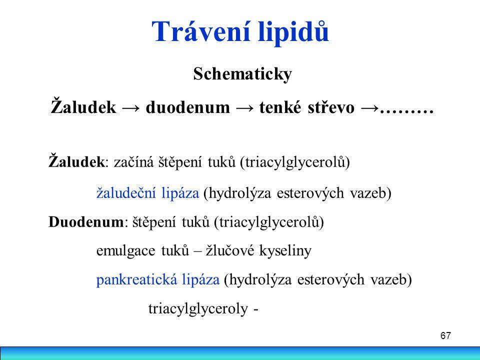 67 Trávení lipidů Schematicky Žaludek → duodenum → tenké střevo →……… Žaludek: začíná štěpení tuků (triacylglycerolů) žaludeční lipáza (hydrolýza ester