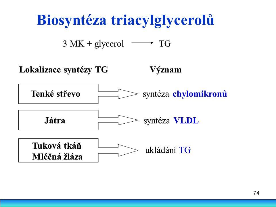 74 Biosyntéza triacylglycerolů 3 MK + glycerol TG Lokalizace syntézy TG Význam Tenké střevo syntéza chylomikronů Játra syntéza VLDL Tuková tkáň Mléčná