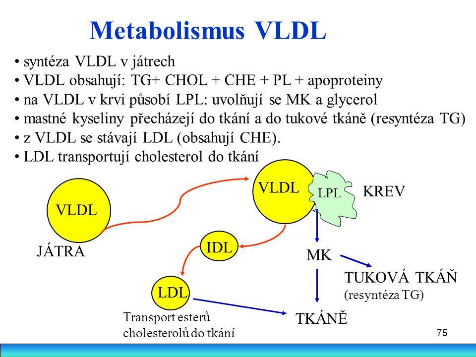 75 Metabolismus VLDL TKÁNĚ TUKOVÁ TKÁŇ (resyntéza TG) Transport esterů cholesterolů do tkání JÁTRA KREV MK syntéza VLDL v játrech VLDL obsahují: TG+ C
