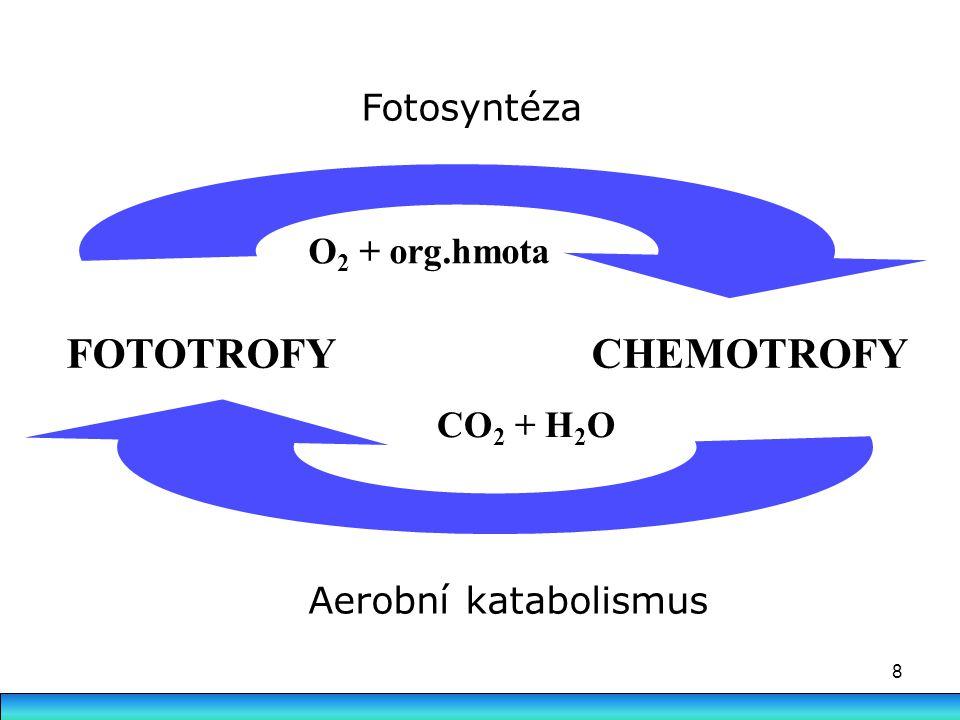 8 FOTOTROFY CHEMOTROFY CO 2 + H 2 O Aerobní katabolismus O 2 + org.hmota Fotosyntéza