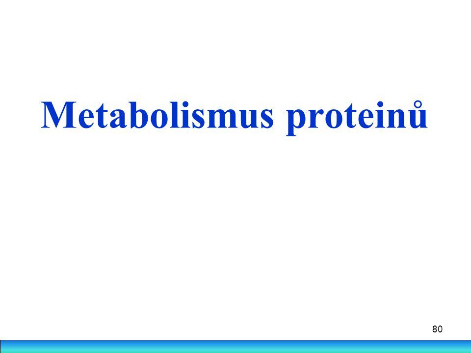 80 Metabolismus proteinů