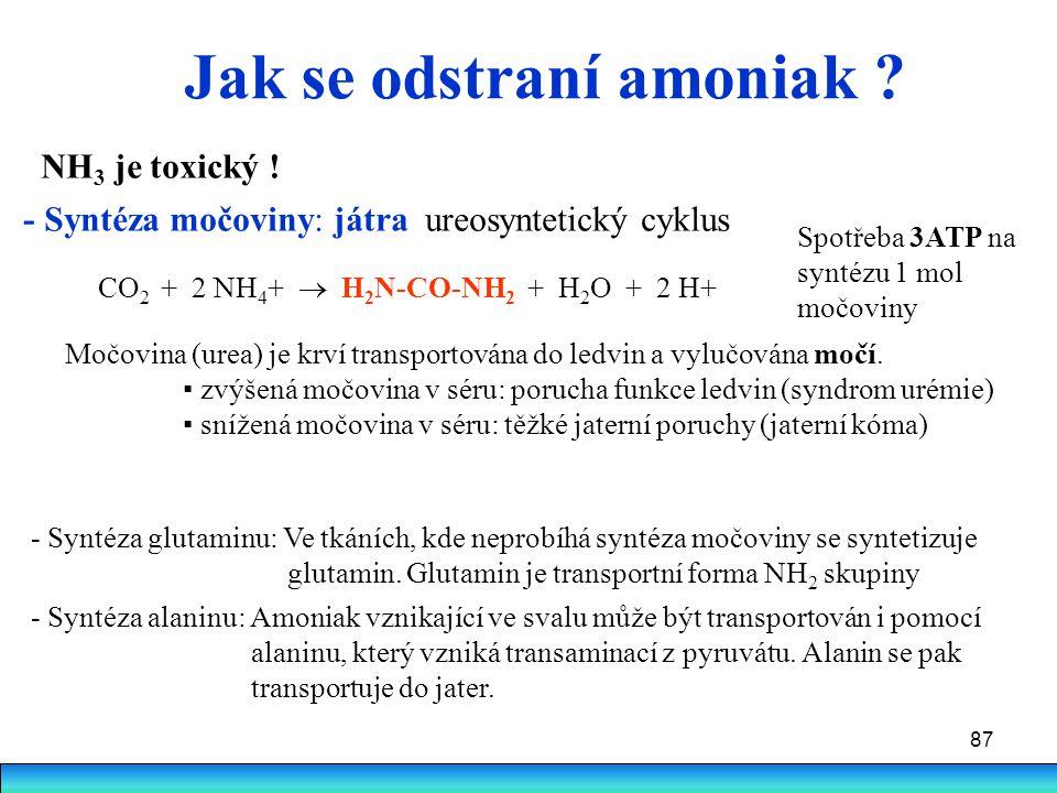 87 Jak se odstraní amoniak ? NH 3 je toxický ! - Syntéza močoviny: játra ureosyntetický cyklus CO 2 + 2 NH 4 +  H 2 N-CO-NH 2 + H 2 O + 2 H+ Močovina