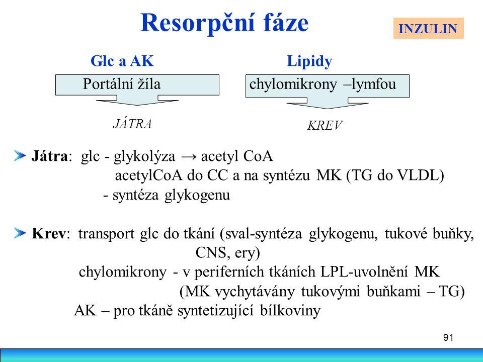 91 Resorpční fáze Játra: glc - glykolýza → acetyl CoA acetylCoA do CC a na syntézu MK (TG do VLDL) - syntéza glykogenu Krev: transport glc do tkání (s