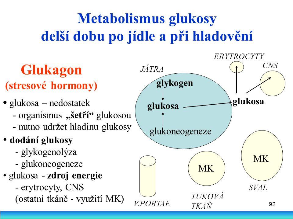 92 Metabolismus glukosy delší dobu po jídle a při hladovění Glukagon (stresové hormony) glukosa glykogen JÁTRA glukosa ERYTROCYTY CNS SVAL TUKOVÁ TKÁŇ