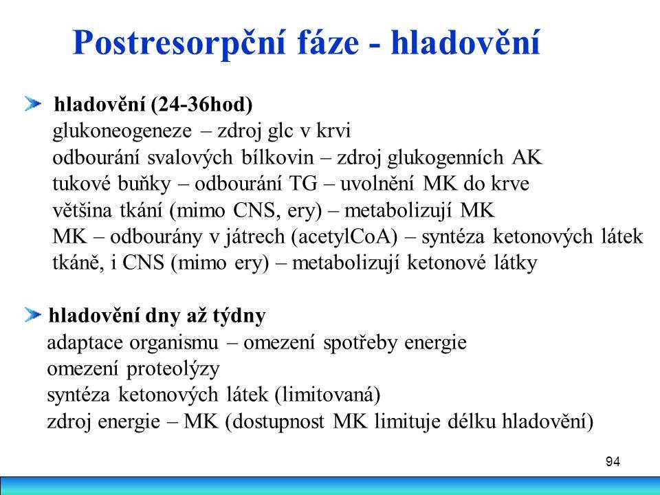 94 Postresorpční fáze - hladovění hladovění (24-36hod) glukoneogeneze – zdroj glc v krvi odbourání svalových bílkovin – zdroj glukogenních AK tukové b