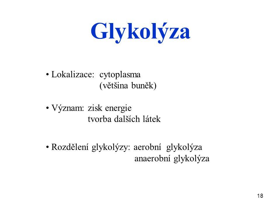 18 Lokalizace: cytoplasma (většina buněk) Význam: zisk energie tvorba dalších látek Rozdělení glykolýzy: aerobní glykolýza anaerobní glykolýza Glykolýza