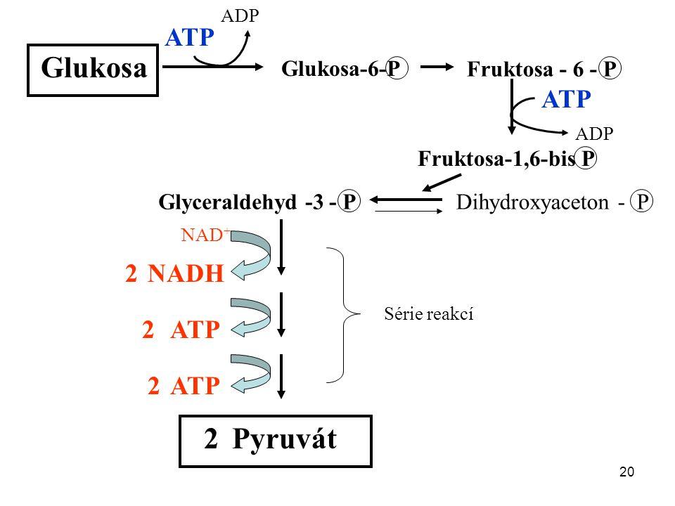 20 Glukosa Glukosa-6-P Fruktosa - 6 - P Fruktosa-1,6-bis P ATP ADP ATP ADP Glyceraldehyd -3 - PDihydroxyaceton - P NADH ATP Série reakcí Pyruvát 2 2 2