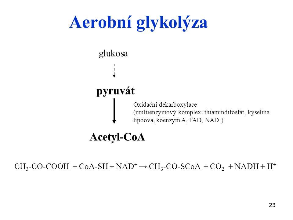 23 Aerobní glykolýza glukosa Acetyl-CoA Oxidační dekarboxylace (multienzymový komplex: thiamindifosfát, kyselina lipoová, koenzym A, FAD, NAD + ) pyruvát CH 3 -CO-COOH + CoA-SH + NAD + → CH 3 -CO-SCoA + CO 2 + NADH + H +