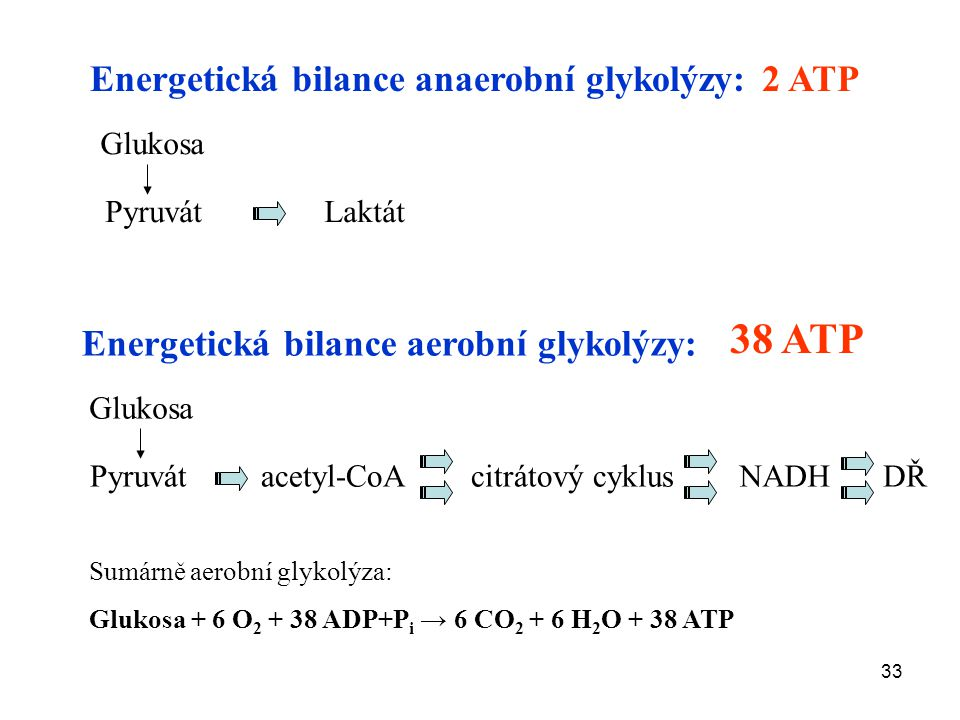 33 Energetická bilance anaerobní glykolýzy: Glukosa 2 ATP Energetická bilance aerobní glykolýzy: 38 ATP Glukosa Pyruvát Laktát Pyruvát acetyl-CoA citrátový cyklusNADHDŘ Sumárně aerobní glykolýza: Glukosa + 6 O 2 + 38 ADP+P i → 6 CO 2 + 6 H 2 O + 38 ATP