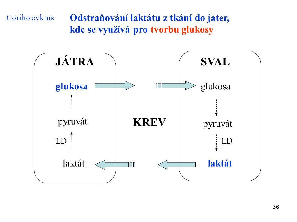 36 SVAL glukosa pyruvát laktát LD JÁTRA laktát LD pyruvát glukosa Coriho cyklus KREV Odstraňování laktátu z tkání do jater, kde se využívá pro tvorbu