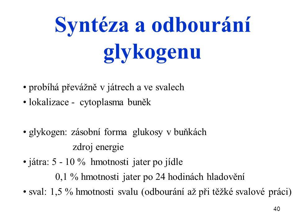 40 probíhá převážně v játrech a ve svalech lokalizace - cytoplasma buněk glykogen: zásobní forma glukosy v buňkách zdroj energie játra: 5 - 10 % hmotnosti jater po jídle 0,1 % hmotnosti jater po 24 hodinách hladovění sval: 1,5 % hmotnosti svalu (odbourání až při těžké svalové práci) Syntéza a odbourání glykogenu
