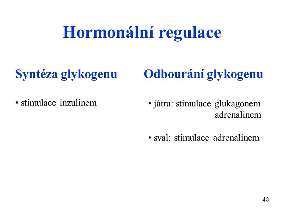 43 Syntéza glykogenuOdbourání glykogenu stimulace inzulinem Hormonální regulace játra: stimulace glukagonem adrenalinem sval: stimulace adrenalinem