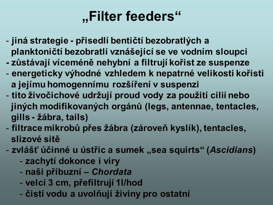 """""""Filter feeders"""" - jiná strategie - přisedlí bentičtí bezobratlých a planktoničtí bezobratlí vznášející se ve vodním sloupci - zůstávají víceméně nehy"""