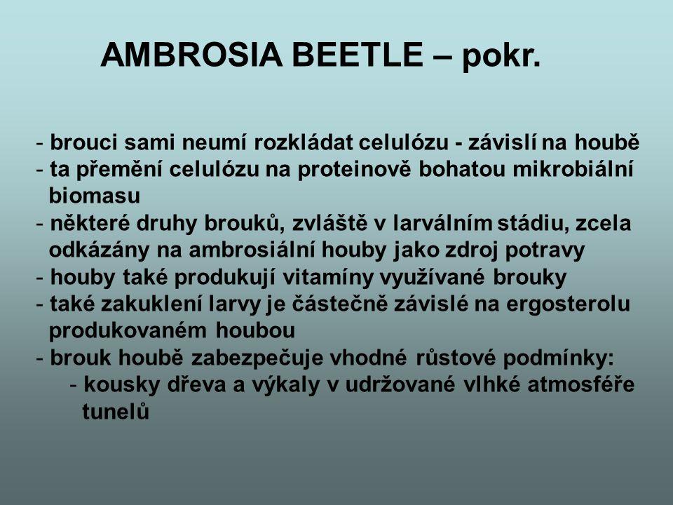 2005, Kaltenpoth et al - symbióza mezi novým druhem Streptomyces a samotářsky lovící vosou, the European Beewolf, Philanthus triangulum, květolib včelí Květolib včelí
