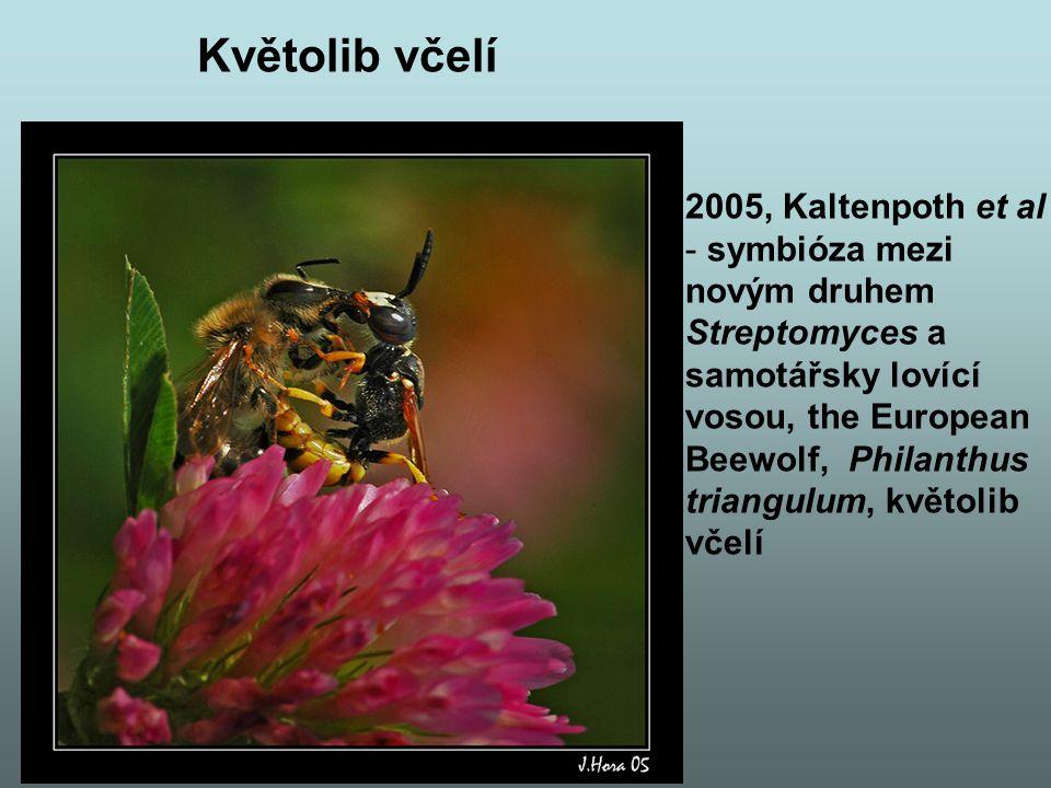 Květolib včelí – pokr.