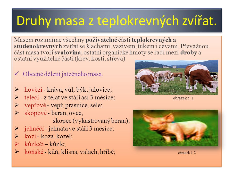 Druhy masa z teplokrevných zvířat.
