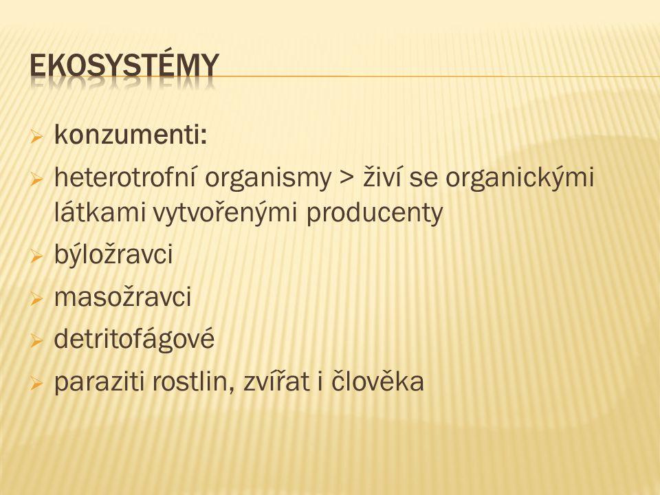  konzumenti:  heterotrofní organismy > živí se organickými látkami vytvořenými producenty  býložravci  masožravci  detritofágové  paraziti rostlin, zvířat i člověka