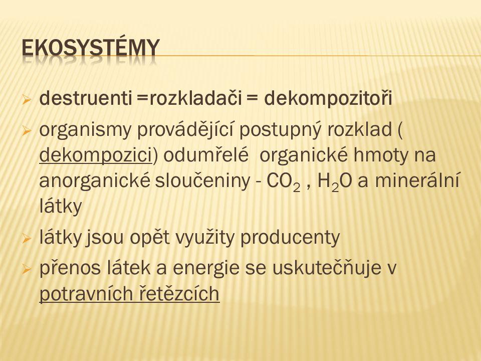  destruenti =rozkladači = dekompozitoři  organismy provádějící postupný rozklad ( dekompozici) odumřelé organické hmoty na anorganické sloučeniny - CO 2, H 2 O a minerální látky  látky jsou opět využity producenty  přenos látek a energie se uskutečňuje v potravních řetězcích