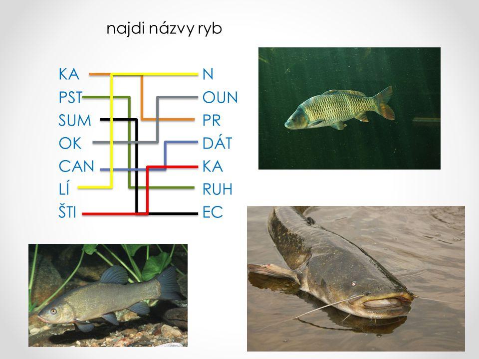 najdi názvy ryb KAN PSTOUN SUMPR OKDÁT CANKA LÍRUH ŠTIEC