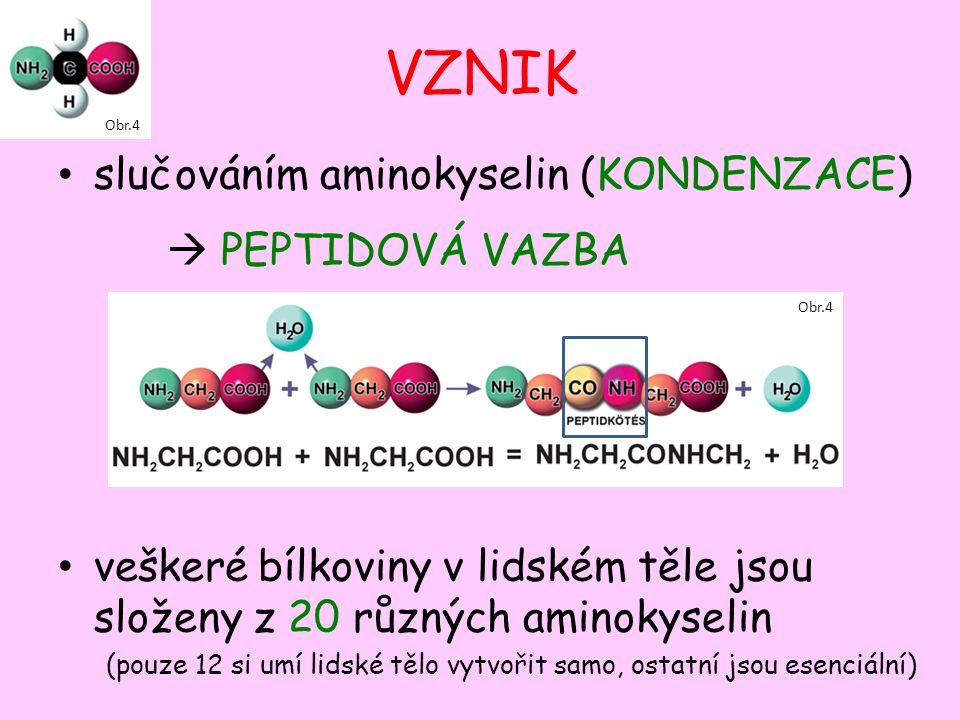 VZNIK slučováním aminokyselin (KONDENZACE)  PEPTIDOVÁ VAZBA veškeré bílkoviny v lidském těle jsou složeny z 20 různých aminokyselin (pouze 12 si umí