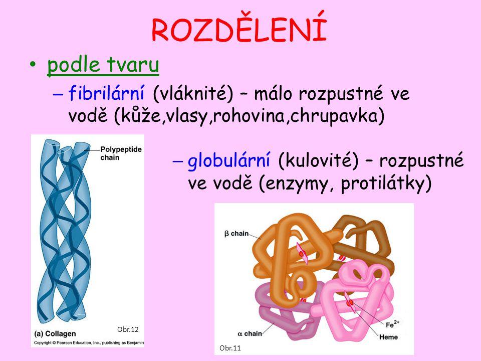 Funkce bílkovinPohybová aktin a myosin – zajišťují pohyb svalů tubulin – pohyb bakterií, spermií Obr.13 Obr.14 Obr.15 Obr.16 Obr.17 Obr.18 Stavební keratin – vlasy, nehty elastin, kolagen – šlachy, vaziva, pokožka tubulin - cytoskelet