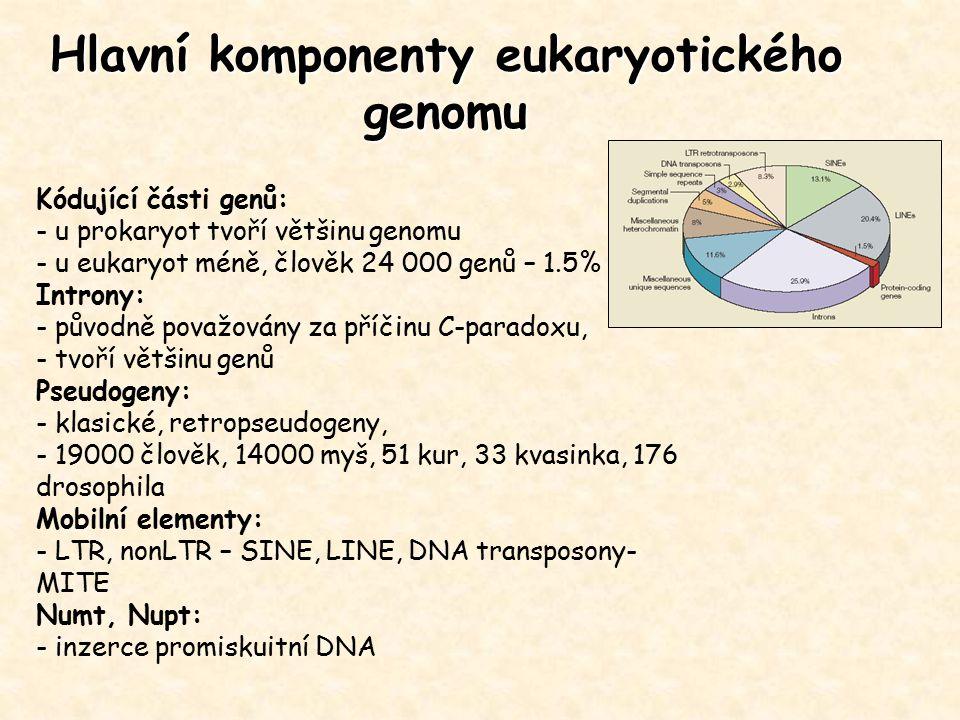 Hlavní komponenty eukaryotického genomu Kódující části genů: - u prokaryot tvoří většinu genomu - u eukaryot méně, člověk 24 000 genů – 1.5% Introny: