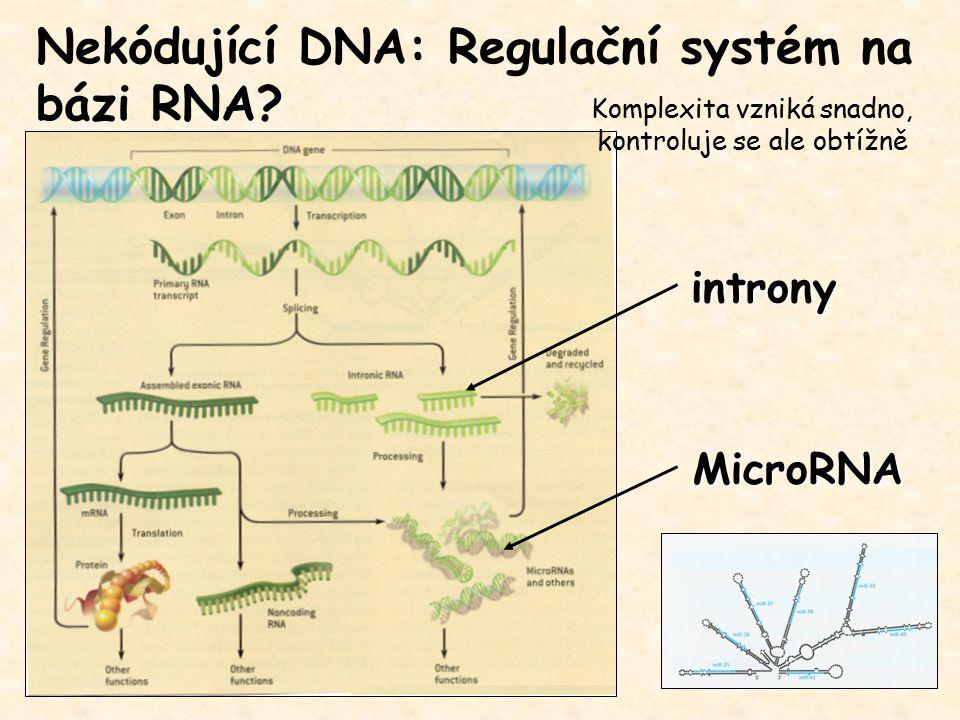 MicroRNA Nekódující DNA: Regulační systém na bázi RNA? introny Komplexita vzniká snadno, kontroluje se ale obtížně