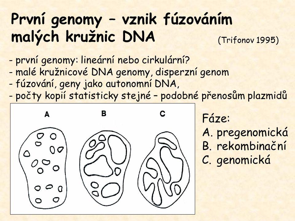 Vliv velikosti genomu na fenotyp Velikost genomu koreluje s: + - velikostí jádra - velikostí buňky (nucleotypic effect) - dobou mitózy a meiózy - minimální generační dobou - velikostí semen - odpovědí letniček vůči CO 2 - dobou vývoje embrya u mloků - - rychlostí bazálního metabolismu u obratlovců (negativní korelace) (malý genom ptáků a netopýrů - rychlý metabolismus při letu, velký genom ryb - estivace za hypoxických podmínek) - morfologickou komplexitou mozků u žab a mloků (negativní korelace)