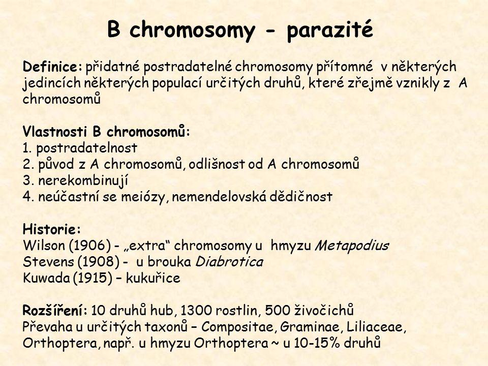 B chromosomy - parazité Definice: přidatné postradatelné chromosomy přítomné v některých jedincích některých populací určitých druhů, které zřejmě vzn