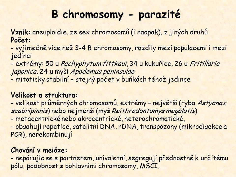B chromosomy - parazité Vznik: aneuploidie, ze sex chromosomů (i naopak), z jiných druhů Počet: - vyjímečně více než 3-4 B chromosomy, rozdíly mezi po