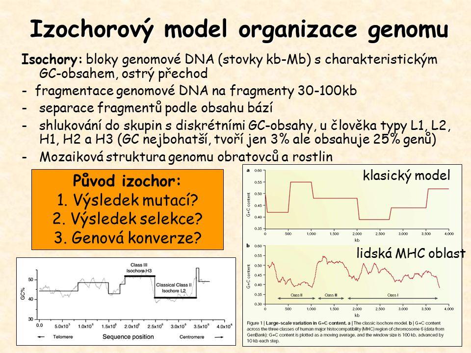 Isochory: bloky genomové DNA (stovky kb-Mb) s charakteristickým GC-obsahem, ostrý přechod - fragmentace genomové DNA na fragmenty 30-100kb -separace f