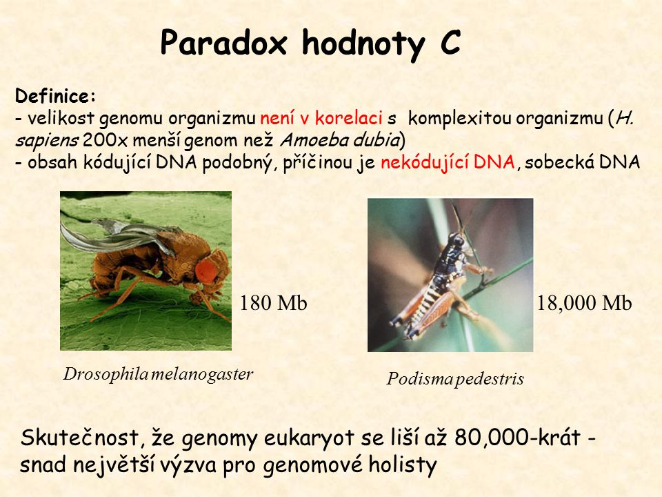 Výhody a nevýhody polyploidů Skoková (kvantová) změna velikosti genomu – nadějné monstrum musí najít partnera Schopnost obsazovat nová prostředí, převládá v evoluci rostlin, i u obratlovců Noví polyploidi – nestabilní – radikalní přestavby genů – rychlá diverzifikace - speciace (změněný počet chromosomů vede k reprodukční izolaci) Multiplikace klíčových genů v regulaci vývoje – multiplikace klastrů homeotických genů vedla k enormní diverzitě druhů ryb