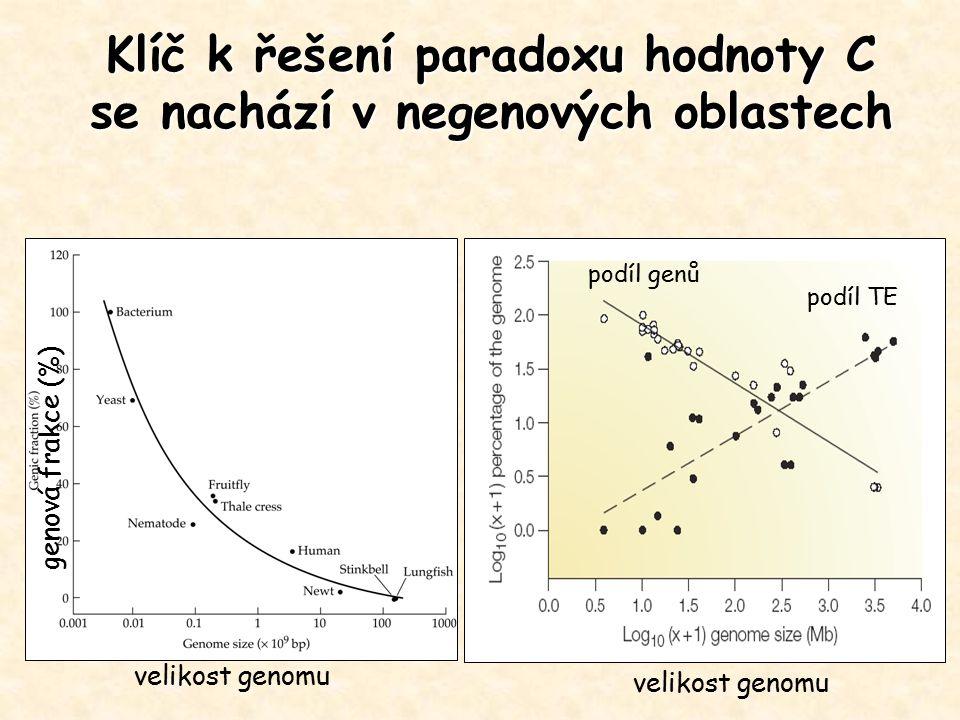Isochory: bloky genomové DNA (stovky kb-Mb) s charakteristickým GC-obsahem, ostrý přechod - fragmentace genomové DNA na fragmenty 30-100kb -separace fragmentů podle obsahu bází -shlukování do skupin s diskrétními GC-obsahy, u člověka typy L1, L2, H1, H2 a H3 (GC nejbohatší, tvoří jen 3% ale obsahuje 25% genů) -Mozaiková struktura genomu obratovců a rostlin Izochorový model organizace genomu klasický model lidská MHC oblast Původ izochor: 1.