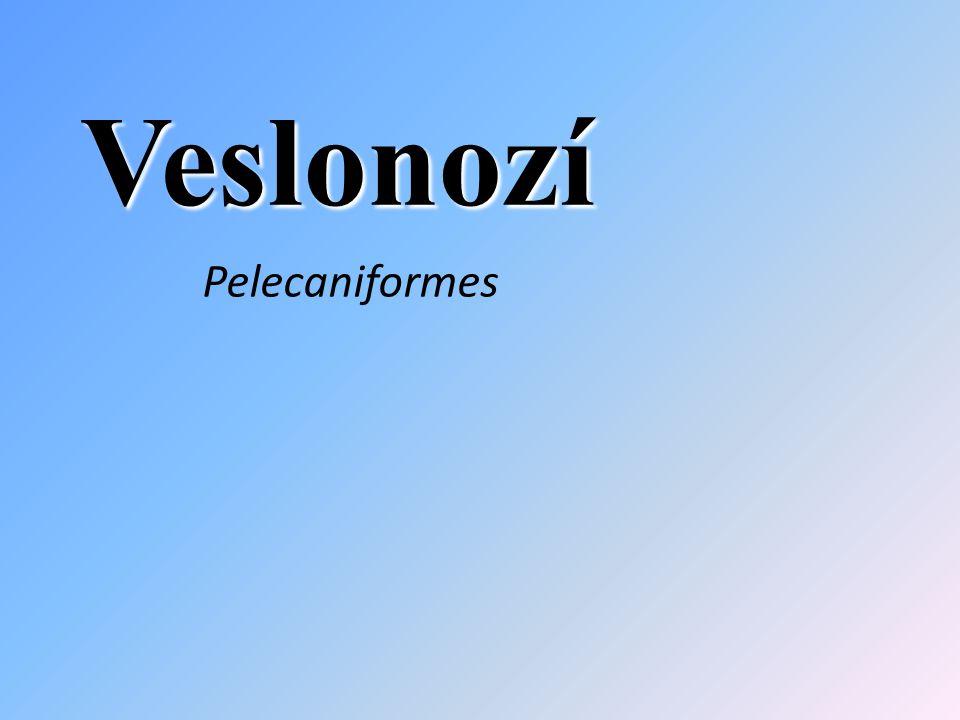 Veslonozí Pelecaniformes
