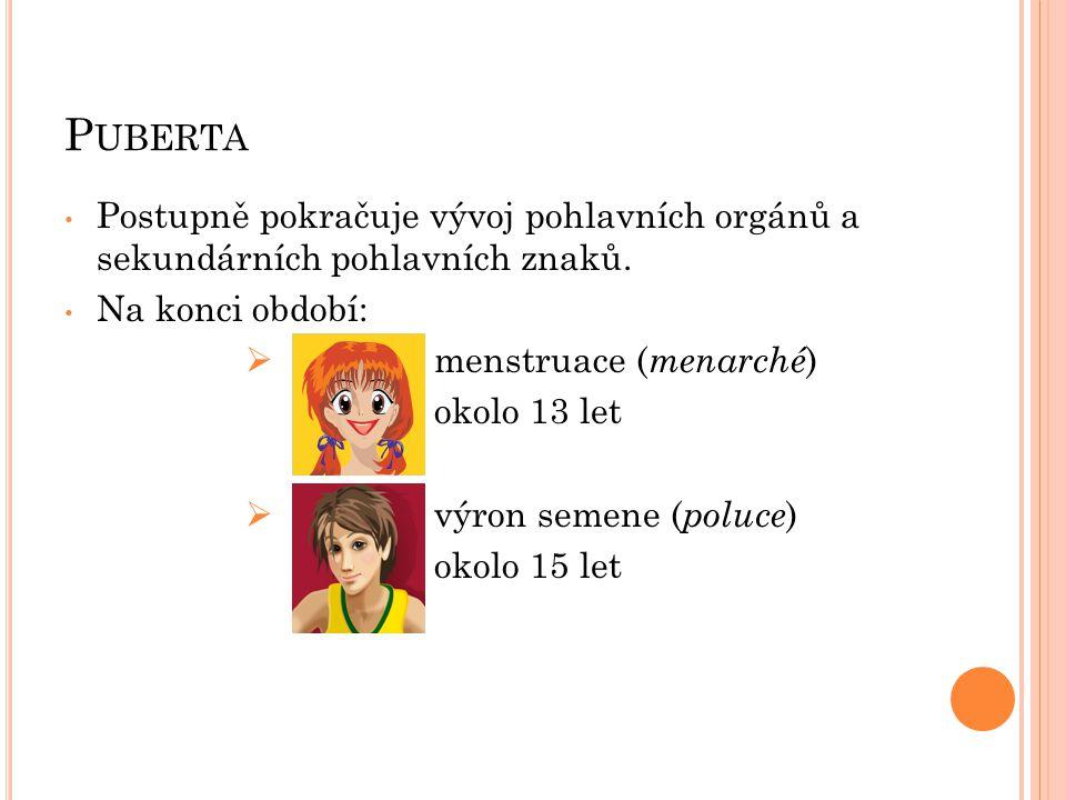 P UBERTA Postupně pokračuje vývoj pohlavních orgánů a sekundárních pohlavních znaků.