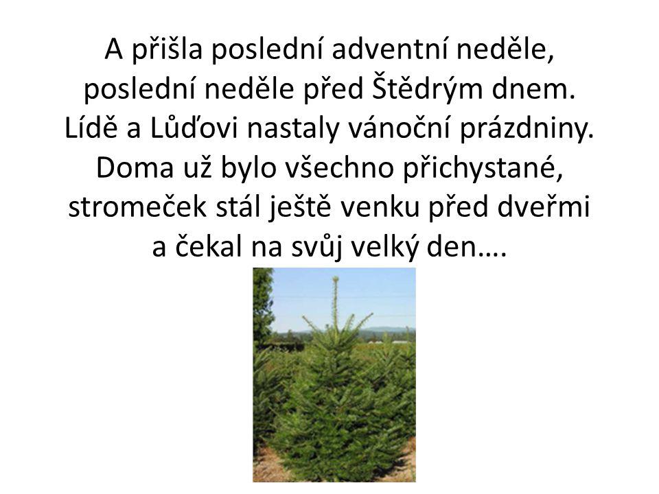 A přišla poslední adventní neděle, poslední neděle před Štědrým dnem. Lídě a Lůďovi nastaly vánoční prázdniny. Doma už bylo všechno přichystané, strom