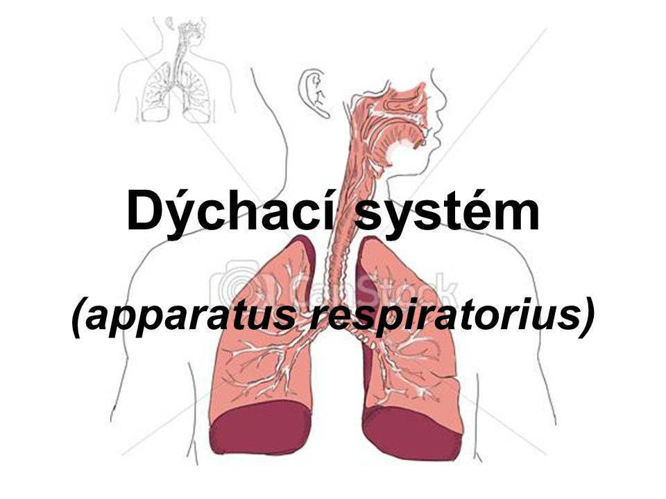 Funkce: výměně dýchacích plynů (O2 a CO2) –zevní dýchání - přenos dýchacích plynů mezi vzduchem a krví v plicích –vnitřním dýcháním – přenos dýchacích plynů mezi krví a tkáněmi Dělení: –Dýchací cesty –Plíce (vlastní orgán)