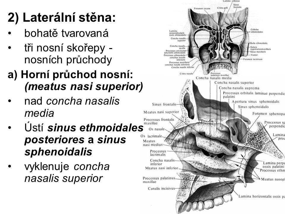 2) Laterální stěna: bohatě tvarovaná tři nosní skořepy - nosních průchody a) Horní průchod nosní: (meatus nasi superior) nad concha nasalis media Ústí sinus ethmoidales posteriores a sinus sphenoidalis vyklenuje concha nasalis superior